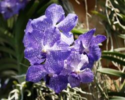 grupp lila blommor foto