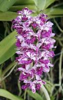 grupp orkidéer foto