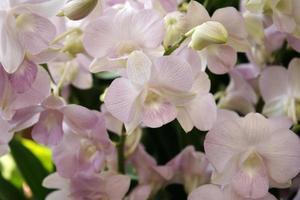 lila orkidéblommor foto