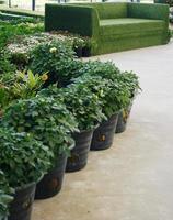 grönt gräs soffa med växter foto