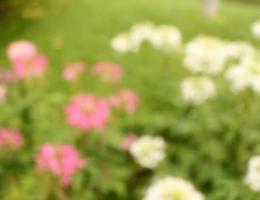 grönt och blommor suddig bakgrundssolljus foto