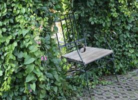 stol i trädgården foto