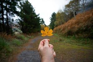 hand med ett gult lönnlöv på hösten foto