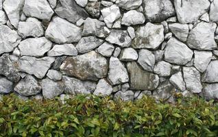 gammal stenvägg med häck foto