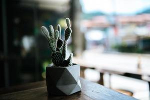 kaktusträd i krukor, selektiv fokus foto