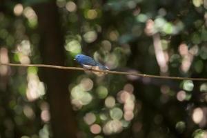 blå fågel på en gren