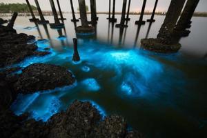 planktonblombelysning på natten foto