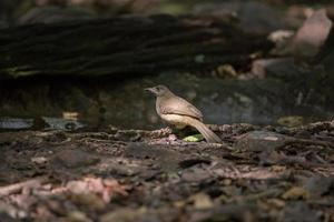 fågel på marken