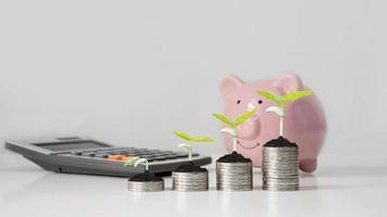 pengarträd och rosa spargris, mina egna pengar-sparande idéer och pensionsplan foto