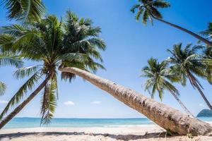 palmer på en vit strand foto