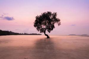 träd i vattnet foto
