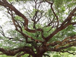 vridna gröna träd