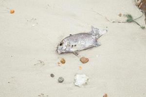 död fisk på stranden foto
