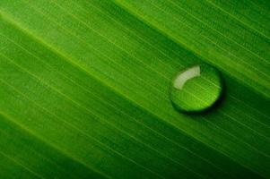 droppe vatten på ett bananblad foto