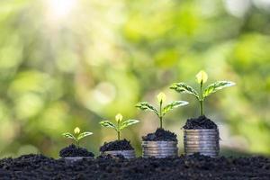det växande trädet på myntet representerar begreppet affärstillväxt, penningtillväxt och att spara pengar foto