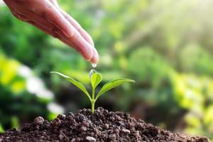 plantor på mark och händer, människor som häller vatten, bilar, träd, idéer för växttillväxt och textutrymme