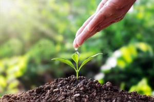 plantor på mark och händer, människor som häller vatten, vattenbilar, träd, växttillväxtidéer och textutrymme