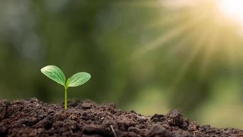 träd med gröna blad som växer på marken i suddig grön natur bakgrund, återplantering av skog och miljöskydd koncept foto