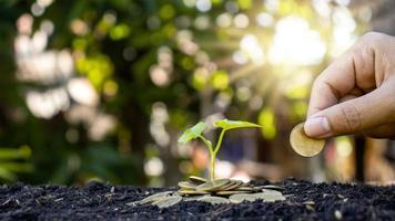 plantera träd på en hög med pengar i marken och suddig grön naturbakgrund, ekonomiska och investeringsidéer för affärstillväxt foto
