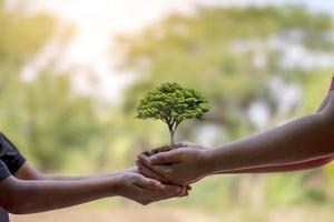 träd som växer i människors händer hjälper till att plantera plantor, bevara naturen och plantera träd foto