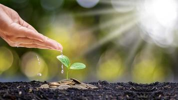 bondens händer vattnar växter som växer på mynthögar staplade på marken och naturligt ljus med ekonomiska tillväxtidéer foto