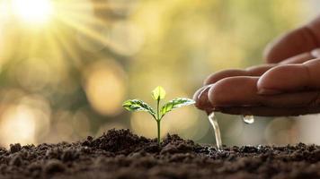 odla växter i bördig jord och bevattna, plantera idéer och investeringar för jordbrukare foto