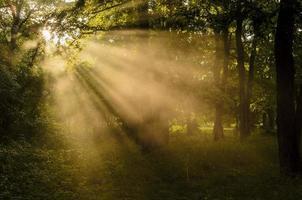 soliga strålar i skogen foto