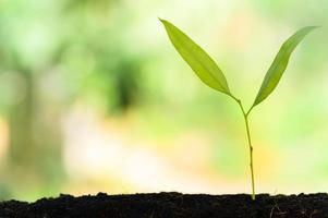 växande träd på naturlig bakgrund foto