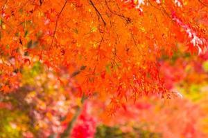vackra röda lönnlöv foto