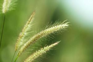 närbild av gräs med suddig bakgrund