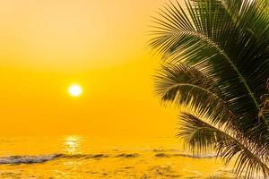 palmer vid havet