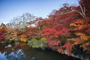 höstträd nära vatten foto