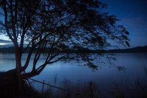 silhuett av ett träd vid blå timme foto