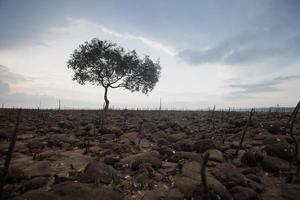 enda träd i ett fält foto