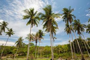 palmer och blå himmel foto