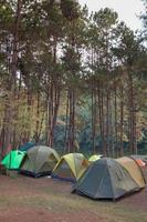 grupp av tält och träd foto