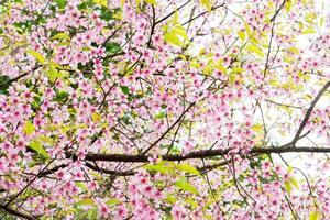 rosa blommor på ett träd under dagen foto