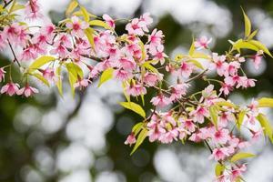 rosa blommor på en gren foto