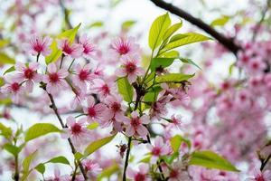 rosa blommor och gröna blad
