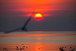mås mot en solnedgång foto