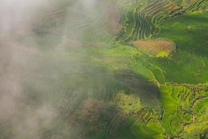 Flygfoto över risfält höljd i dimma