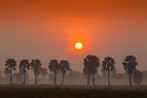 röd solnedgång med palmer