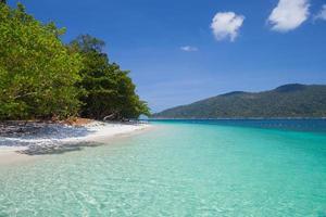 träd på en tropisk strand och berg