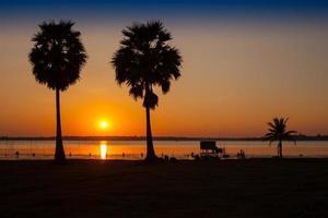 solnedgång och palmer foto