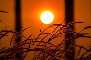 fält av gräs vid soluppgång foto