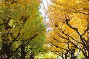 färgglada höstträd foto