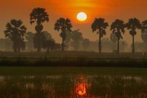 solnedgång bakom palmer