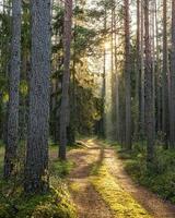 mossig väg i skogen på en solig hösteftermiddag
