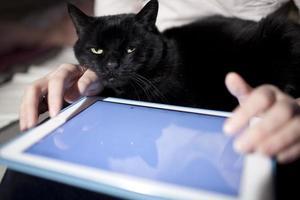 katt i en persons knä med en tom tablett foto