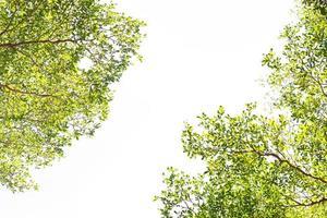 gröna blad på vit bakgrund foto